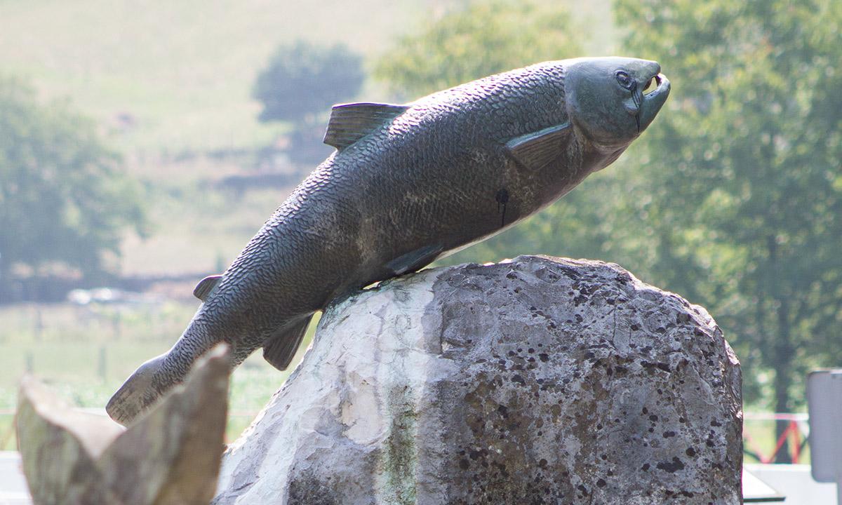 Estatua homenaje al salmón - Ayuntamiento de Ampuero